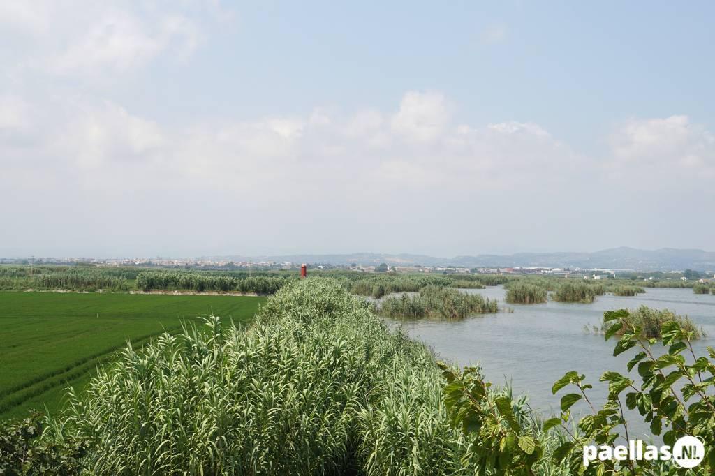 Paella wat is het - Oevers van het meer van Albufera